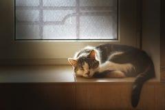 Die Hauskatze, die auf Fliesenfensterbrett schläft, beleuchtete durch Sonnenlicht Stockfoto