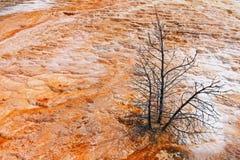 Die heiße Quelle Yellowstone Mammonth Stockbilder