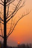 Die helle rote Sonne über Oberseiten der Pelzbäume Stockbilder