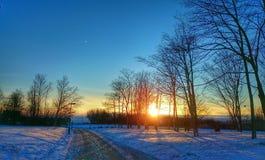 Die helle rote Sonne über Oberseiten der Pelzbäume Lizenzfreie Stockbilder