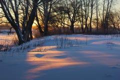 Die helle rote Sonne über Oberseiten der Pelzbäume Stockbild
