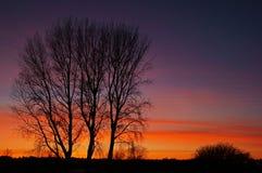 Die helle rote Sonne über Oberseiten der Pelzbäume stockfotos