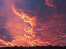 Die helle rote Sonne über Oberseiten der Pelzbäume Lizenzfreies Stockbild