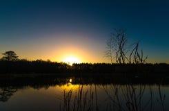 Die helle rote Sonne über Oberseiten der Pelzbäume Lizenzfreie Stockfotos