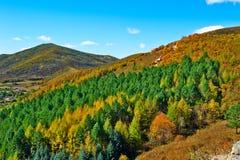 Die Herbstabhangkiefer und -zypresse Lizenzfreie Stockbilder