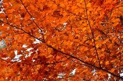 Die Herbstansammlung von Farben Stockfotografie