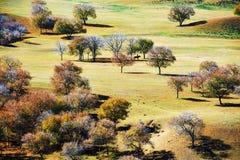 Die Herbstbäume auf der Steppe Stockfotografie