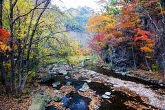 Die Herbstbäume und -fluß szenisch lizenzfreies stockfoto
