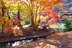 Die Herbstbäume und -teich Lizenzfreie Stockfotos