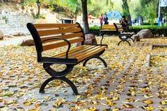 Die Herbstblätter Lizenzfreies Stockfoto