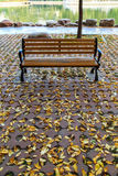 Die Herbstblätter Lizenzfreies Stockbild