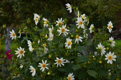 Die Herbstblume lizenzfreies stockfoto