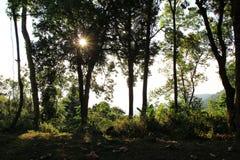 Die Herbstlandschaft in einem Wald mit Schatten der Bäume und des trockenen Laubs auf einem Gras an einem sonnigen Tag Stockfoto