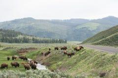 Die Herde Lizenzfreies Stockfoto