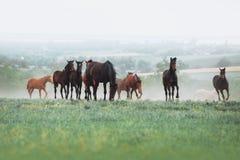 Die Herde von Pferden lassen auf dem Gebiet vor dem hintergrund der Landschaft und des Morgendunstes weiden Stockfoto