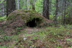 Die Höhle des Bären Lizenzfreies Stockbild