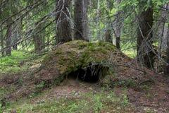 Die Höhle des Bären Stockfotografie