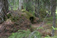 Die Höhle des Bären Stockbild