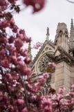 Die historische Fassade von Notre Dame Cathedral in Paris in den rosa Bäumen stockfoto
