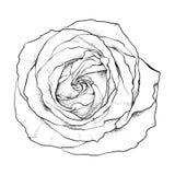 rosen vektorillustrationshand gezeichnet gemalt vektor abbildung bild 52698034. Black Bedroom Furniture Sets. Home Design Ideas
