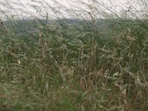Die hohen Grasland-Gräser wachsen in einem Parkplatz Stockfotos