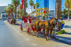 Die hourses in Sousse Lizenzfreie Stockfotos