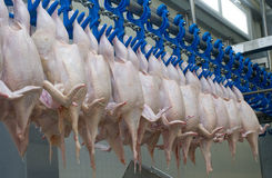 Die Huhnfabrik Stockbild