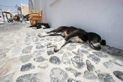 Die Hunde Stockbilder