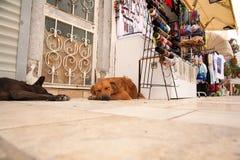Die Hunde liegt nahe bei den Andenkenständen Bunte traditionelle Armbänder Stockbild