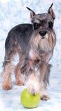 Die Hundestandplätze lizenzfreies stockfoto