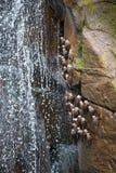 Die Iguaçu-Wasserfälle seltene Vögel Stockfoto