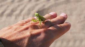 Die Insekt Gottesanbeterin sitzt auf einer Mann ` s Hand stock footage