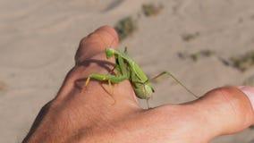 Die Insekt Gottesanbeterin sitzt auf einer Mann ` s Hand stock video footage