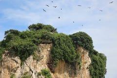Die Insel des Vogels Stockbilder