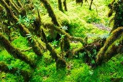 Die Integrität des Waldes Stockfoto