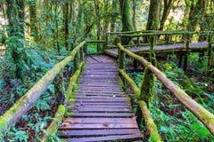 Die Integrität des Waldes Stockfotografie