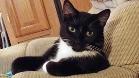 Die interessanteste Katze in der Welt Lizenzfreie Stockbilder
