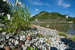 Die Invasion des Schmetterlingkohlweiß Lizenzfreie Stockfotografie