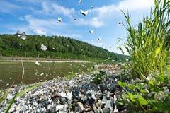 Die Invasion des Schmetterlingkohlweiß Lizenzfreie Stockfotos