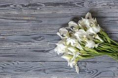 Die Iris auf einem hölzernen Hintergrund Stockfotos