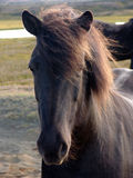 Die isländischen horsy 07 lizenzfreie stockfotografie