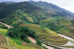 Die Jahreszeit des Goldes in MU Cang Chai Lizenzfreies Stockbild