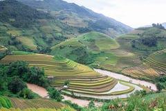 Die Jahreszeit des Goldes in MU Cang Chai Lizenzfreie Stockfotos
