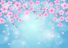 Die Jahreszeiten, die Hintergrund mit Kirschblüten grüßen, blüht Niederlassungen auf blauem Hintergrund mit bokeh lizenzfreie abbildung