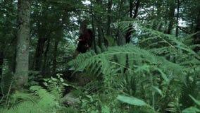 Die junge Sportfrau, die durch Blätter des Farns genommen wird, steht mit dem Wandern der Tasche im tiefgrünen Wald und schaut he stock video