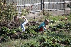Die jungen Erntemaschinen Stockfotografie