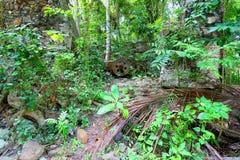 Die Jungferninseln-tropische Vegetation Lizenzfreie Stockfotos