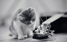 Die Kätzchenspiele mit einer Gitarrenschnur Stockfotografie