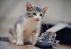 Die Kätzchenspiele mit einer Gitarrenschnur Stockbild