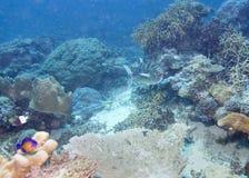Die köstlich der Unterwasserfisch in Australien, dieser Fisch ist sehr fruchtig aber Blicke Stockfotografie